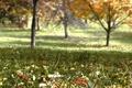 Картинка листья, деревья, осень, трава, сад