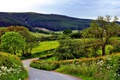 Картинка дорога, деревья, холмы, поля, Великобритания, леса, Yorkshire