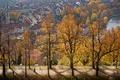 Картинка осень, деревья, вид, красота, аллея, Switzerland, Bern