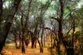 Картинка лес, трава, деревья, США, штат Калифорния, Виндзор, Foothill Regional Park
