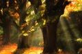 Картинка осень, листья, деревья