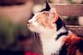 Картинка кошка, кот, фон, разноцветный
