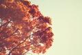 Картинка листья, дерево, оранжевые