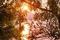 Картинка листья, солнце, ветки, озеро, дерево, рассвет, утро