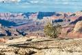 Картинка Гранд-Каньон, tree, South Rim, the Grand Canyon, Саут-Рим