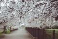 Картинка деревья, цветы, сад, аллея