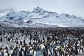 Картинка пейзаж, природа, пингвины