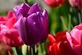 Картинка макро, лепестки, сад, тюльпаны