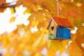 Картинка природа, осень, домик