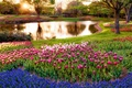 Картинка trees, water, flowers, pond, water body