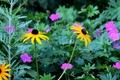 Картинка трава, листья, цветы, лепестки, сад, луг