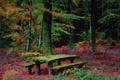 Картинка осень, лес, скамья