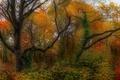 Картинка осень, деревья, природа