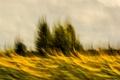 Картинка небо, деревья, подсолнухи, желтый, природа, фон, движение