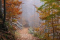 Картинка осень, лес, листья, деревья, туман, путь, дерево