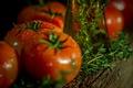 Картинка зелень, капли, помидоры
