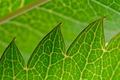 Картинка природа, лист, растение, цвет