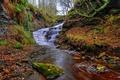 Картинка осень, лес, листья, деревья, ручей, камни, Англия
