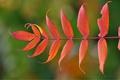 Картинка осень, природа, лист, ветка