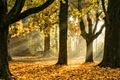 Картинка осень, листья, свет, деревья