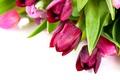 Картинка цветы, весна, colorful, тюльпаны, красочные, flowers, beautiful