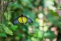 Картинка макро, веточка, бабочка, крылышки