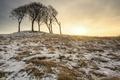 Картинка зима, снег, деревья, природа, утро