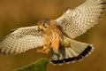 Картинка посадка, клюв, перья, крылья, птица