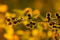Картинка свет, закат, природа, растение, паутина, сорняк