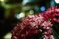 Картинка цветы, лепестки, розовые