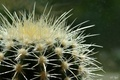 Картинка цветок, кактус, иголочки