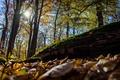 Картинка осень, листья, солнце, деревья, природа, лучи. день