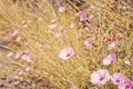 Картинка трава, цветы, лепестки, розовые