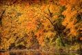 Картинка осень, лес, деревья, природа