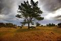 Картинка поле, небо, трава, природа, фото, дерево
