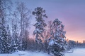 Картинка зима, лес, снег, деревья, закат, вечер