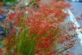 Картинка природа, растение, трава