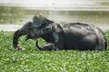 Картинка радость, природа, слоны, водоем, слониха, слонёнок