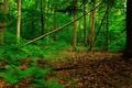 Картинка листья, лес, заросли, деревбя