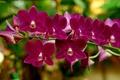 Картинка цветы, цветение, орхидея