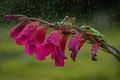 Картинка цветок, дождь, лапки, зеленые, дружба, лягушки, оранжевые