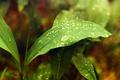 Картинка листья, капли, дождь, Природа