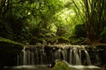 Картинка лес, деревья, поток, бамбук, каскад