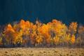 Картинка деревья, листья, трава, осень, поле