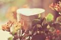 Картинка листья, макро, растение, шкатулка