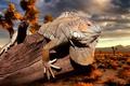 Картинка rock, desert, iguana, flakes