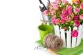 Картинка цветы, белый фон, нитки, салфетка, горшочек, розовые розы, секатор