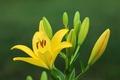 Картинка макро, растение, лилия, лепестки