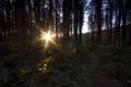 Картинка солнце, деревья, утро, Early morning at Delemere
