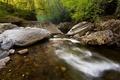 Картинка зелень, лес, природа, ручей, камни, фото